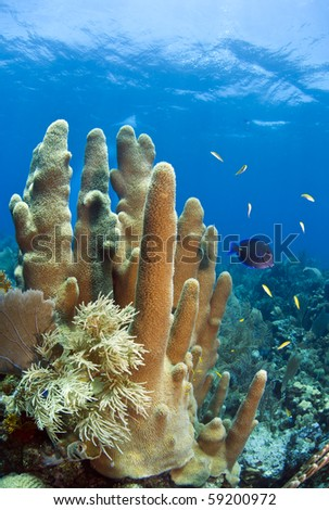 Caribbean coral reef off the coast of Roatan Honduras - stock photo