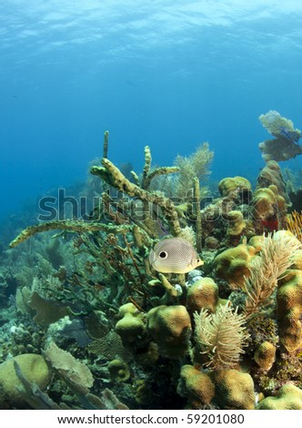 Caribbean coral reef off the coast of Roatan Honduras