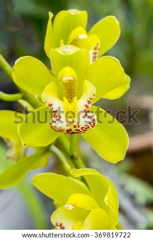 caribbean orchid found in National Park Cuba - stock photo