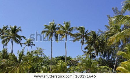 caribbean palm tree in dominican republic