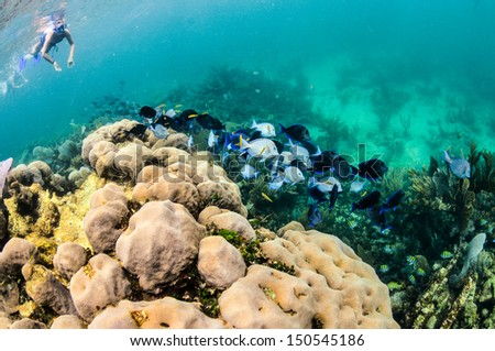 Caribbean reef scenics. - stock photo