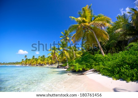 Caribbean sand beach with palm trees in Dominican Republic - stock photo