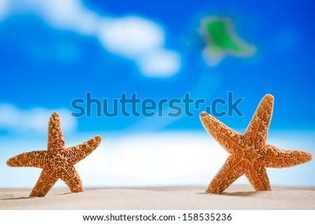Caribbean starfish on white sand beach with ocean, such a summer vacation. shallow dof  - stock photo