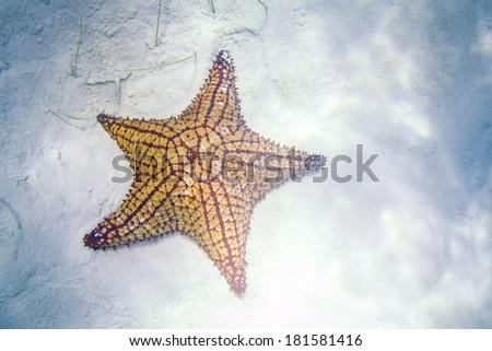 Caribbean Starfish Underwater in so called Natural Pool of Bayahibe near Saona Island in Dominican Republic. National Park Guaraguao. - stock photo