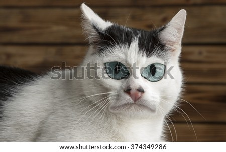 Caricature. black and white cat  - stock photo