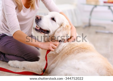 Caring woman. Close up of pleasant dog lying on the floor near the lady wearing collar on it