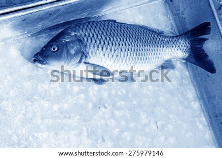 carp in metal plate on the market, closeup of photo