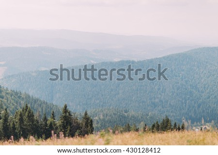 Carpathian pine forest hills landscape under majestic blue sky with some high clouds and yellow field at foreground - stock photo