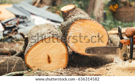 Carpenter using chainsaw woodcutter cut tamarind wood lumberjack for chopping board natural raw material, vintage.