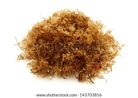 Carrageen moss on a white background - stock photo