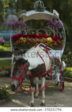 Carriage ( cart) for travel (tour) on street in sunny at Da Lat city, Viet Nam - stock photo