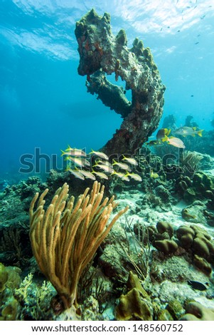 Carribean Coral reef off the coast of the island of Bonaire