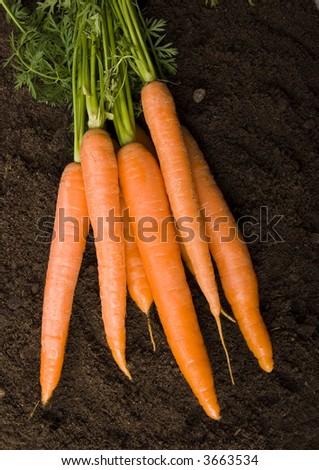 Carrots - stock photo