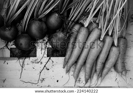 Carrots and Beetroot in Black and White - stock photo