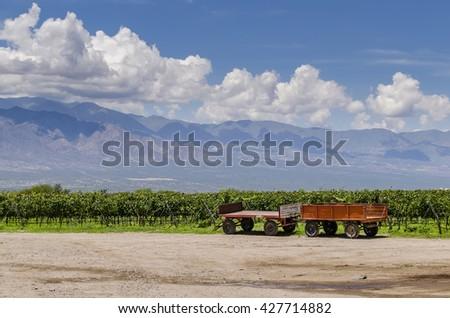 Cart and vineyard - Cafayate - Salta Province - Argentine - stock photo