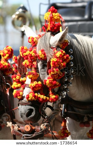 Cart Horse in Andalusia, Spain