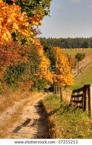 Cart-way and autumn landscape - fall colors