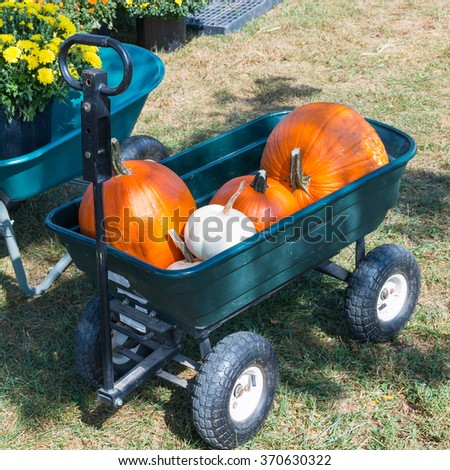 Cart with colorful pumpkins at pumpkin patch. - stock photo