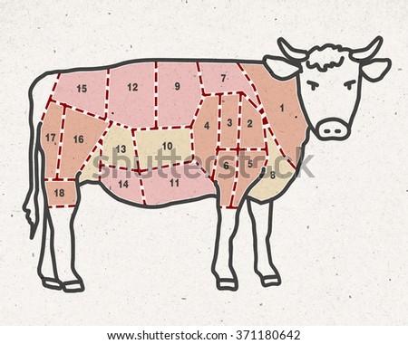 cartoon beef cut -  butcher pieces - stock photo