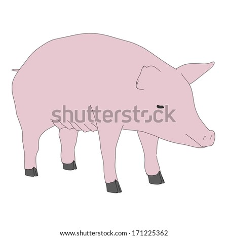 cartoon illustration of female pig