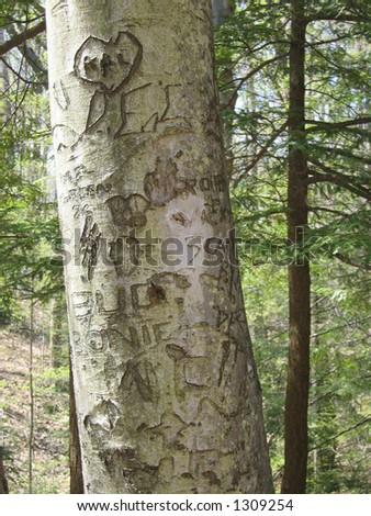 Carvings on a Tree - stock photo