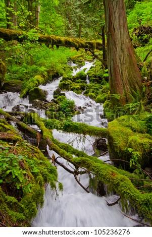 Cascade falls over mossy rocks - stock photo