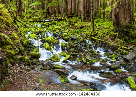 Cascade waterfall in rain forest, Olympic national park - stock photo