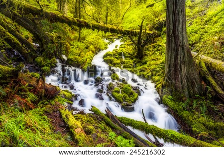 Cascade waterfalls in Oregon forest hike trail. - stock photo