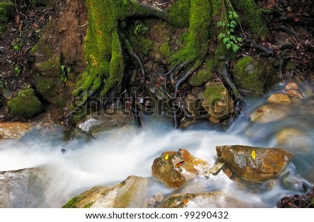 Cascading Creek and mossy roots, Uvas Canyon - stock photo