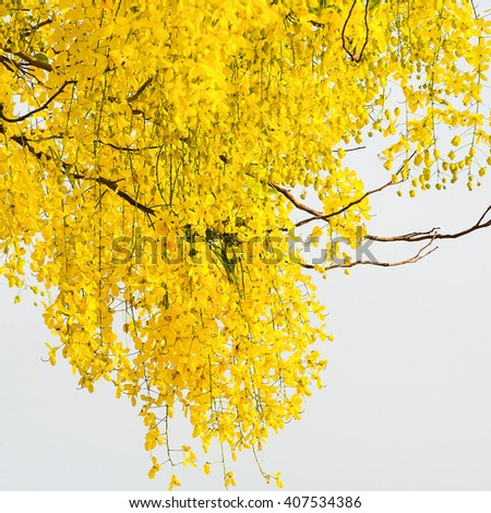 Cassia fistula flower on sky background - stock photo