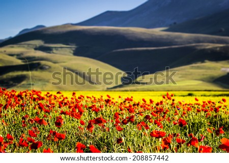 Castelluccio di Norcia, flowering fields and town on the hills, italian landscape in bloom - stock photo