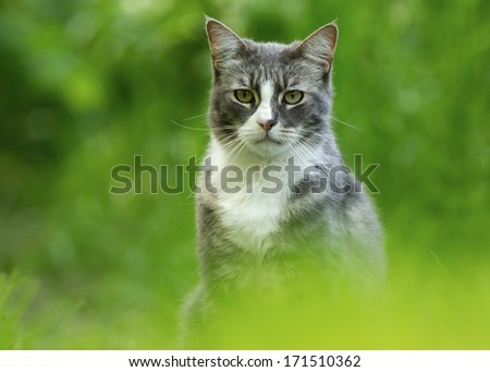 Cat against green background - stock photo