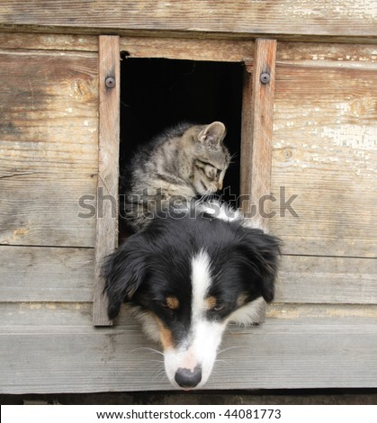 cat and dog are friends