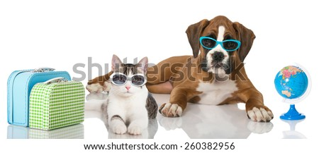 Cat and dog at holiday - stock photo