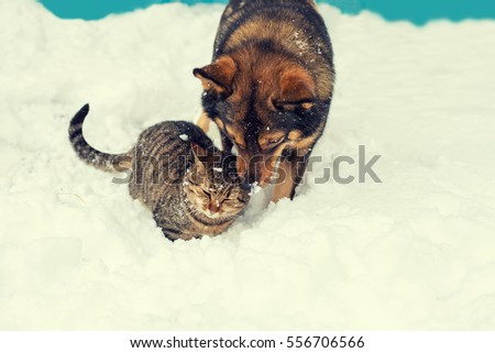 Cat and dog best friends. Cat and dog playing together outdoor on the snow in winter
