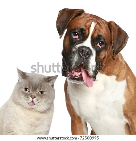 Cat and dog, close-up portrait on a white background - stock photo