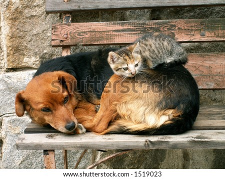 cat and dog, friends