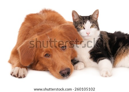 Cat and dog in a friendly pose - stock photo