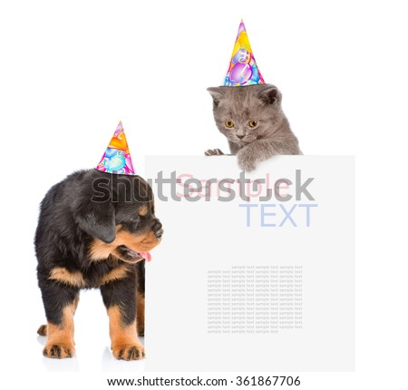 Cat and Dog in birthday hats peeking from behind empty board. isolated on white background - stock photo