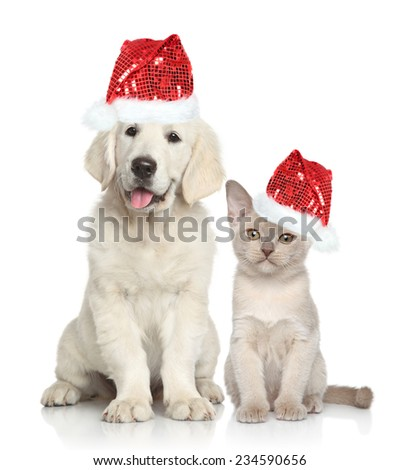 Cat and dog in Santa red hat. Golden Retriever puppy and Burmese kitten on white background - stock photo