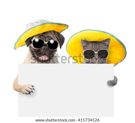 Cat and dog  in sunglasses and hats peeking from behind empty board. isolated on white background - stock photo