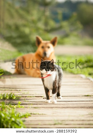 cat and dog in the village - stock photo