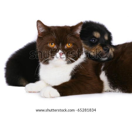 Cat and dog isolated on a white background. - stock photo