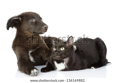cat and dog lie together. Isolated on a white background - stock photo