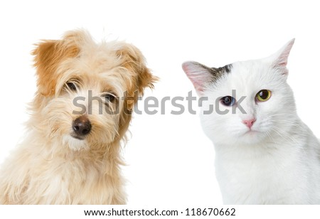 cat and dog looking and camera.  isolated on white background - stock photo