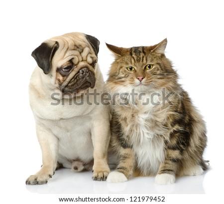 Cat and dog looking at camera. isolated on white background - stock photo