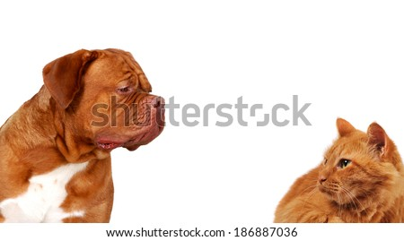 Cat and dog looking at each other, side portraits, on white isolated background                          - stock photo