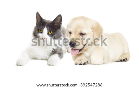 cat and dog looking on white background