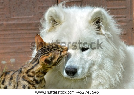 Cat and dog, love - stock photo