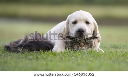 Cat and dog love, friendship, meeting, acquaintance - stock photo